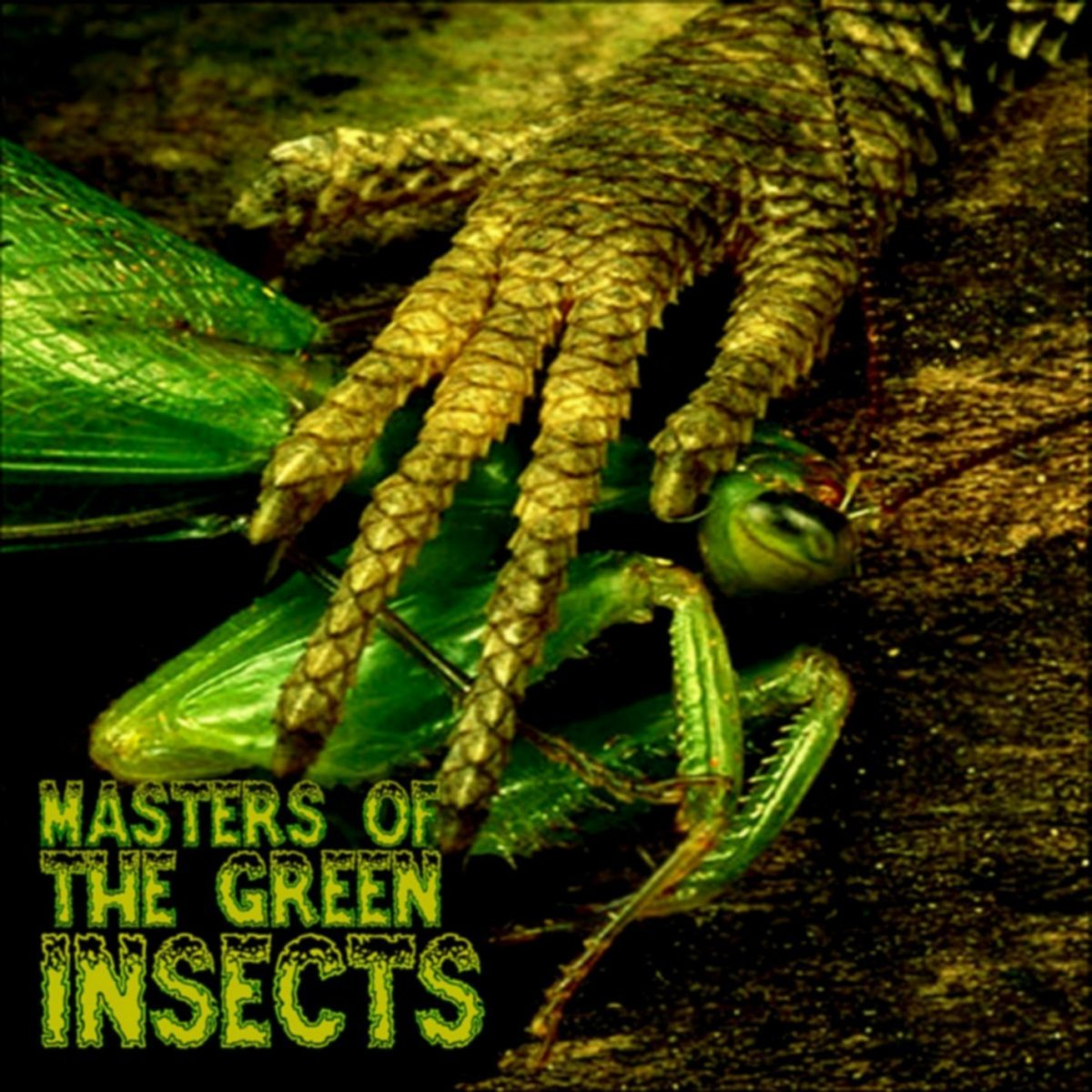 V/A: Masters of the Green Insects (Candymind MP3)